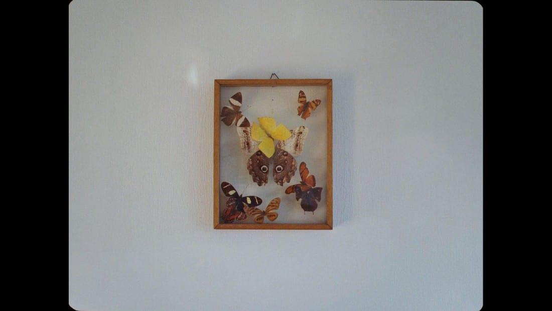 things-Ostbye-sommerfugl169